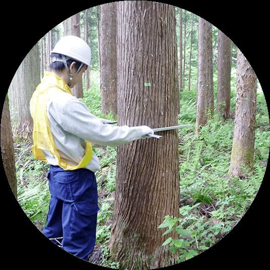 立木調査(秋田県仙北市)